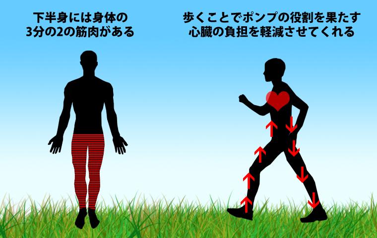 歩くことで血流がよくなる