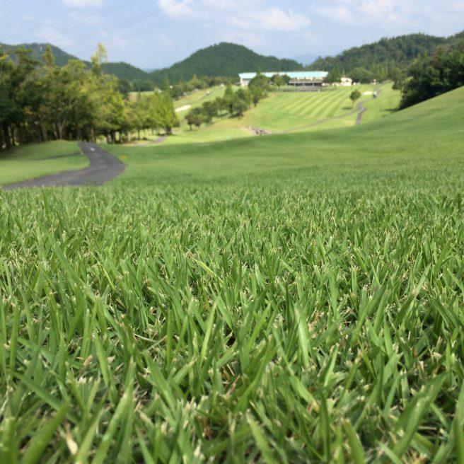 ゴルフ場の芝生と景観